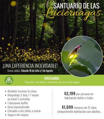 Tp visita el santuario de las luci rnagas agencia de for Espectaculo de luciernagas en tlaxcala