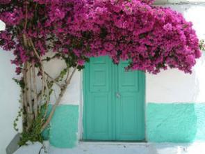 Tp lo que no sab as de las bugambilias narciso - Fotos de buganvillas ...